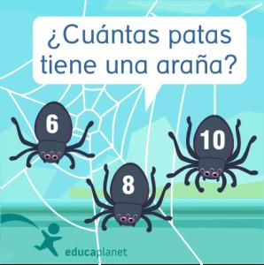 Curiosidades animales - arañas