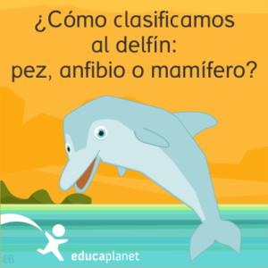 Curiosidades delfín Educaplanet