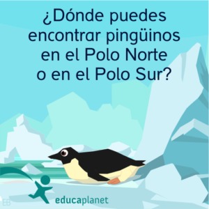Pingüinos curiosidades animales